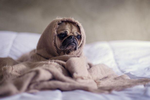 dog-sad